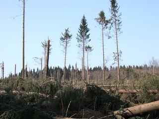 Orkanschaden/Kyrill - Klimawechsel, Waldschäden, Holz, Orkan, Sturm, Wald, Monokultur, Forstwirtschaft, Kyrill, Holzwirtschaft