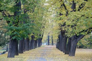 Herbstimpressionen #3 - Herbst, Blätter, Färbung, Baum, Bäume, Allee, rot, gold, bunt, Laub, Vergänglichkeit, Meditation, Schreibanlass