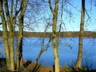 Summter See in Brandenburg (1) - Herbst, See, Seeufer, Schilfbewuchs, Wanderweg, Rundweg, Sonne, kahle Bäume, Sonne, Einsamkeit, Meditation