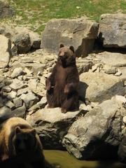 Bär - Tierpark, Bär, Braunbär