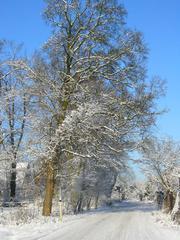 Winterlandschaft  #4 - Winterlandschaft, Winter, Schnee, kahle Bäume, Sonne, Schneelandschaft, Kälte, Einsamkeit, Ruhe, Stille, Schreibanlass, Meditation