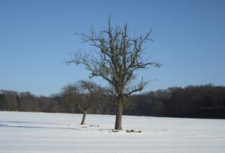 Winterimpressionen #1 - Winterlandschaft, Winter, Schnee, kahle Bäume, Sonne, Schneelandschaft, Kälte, Einsamkeit, Ruhe, Stille, Schreibanlass, Meditation