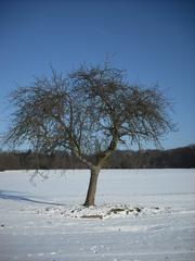 Winterimpressionen #2 - Winterlandschaft, Winter, Schnee, kahle Bäume, Sonne, Schneelandschaft, Kälte, Einsamkeit, Ruhe, Stille, Schreibanlass, Meditation