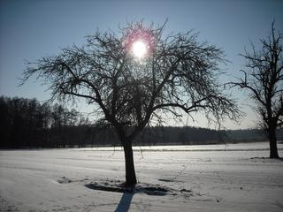 Winterimpressionen #4 - Winterlandschaft, Winter, Schnee, kahle Bäume, Sonne, Schneelandschaft, Kälte, Einsamkeit, Ruhe, Stille, Schreibanlass, Meditation, Gegenlicht