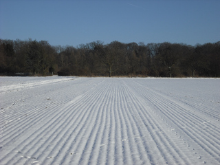 Feld im Winter - Winterlandschaft, Winter, Schnee, kahle Bäume, Sonne, Schneelandschaft, Kälte, Einsamkeit, Ruhe, Stille, Schreibanlass, Meditation, Fluchtpunkt, Perspektive