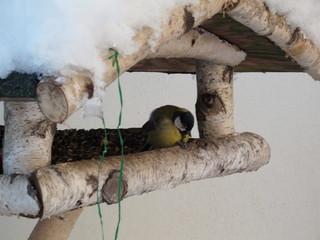 Vogelfütterung #1 - Winter, Schnee, Hunger, Fütterung, füttern, kalt, Vogel, Meise, Kohlmeise, federn, schwarz, Schnabel, Sonnenblumenkern, Vogelhaus, Vogelfütterung, Winterfütterung