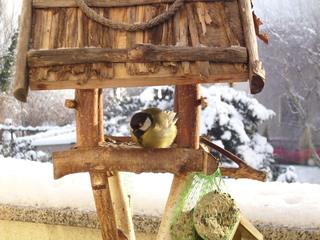 Vogelfütterung #3 - Winter, kalt, Schnee, Hunger, Futter, Sonnenblumenkerne, Vogel, Meise, Kohlmeise, Federn, Schnabel, Vogelfütterung, Winterfütterung