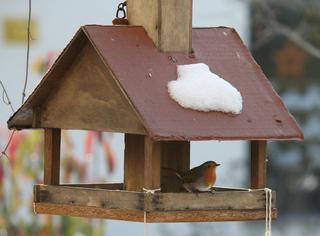 Rotkehlchen - Rotkehlchen, Futtersuche, Vogelhäuschen, Singvogel, Vogelfütterung, Winterfütterung