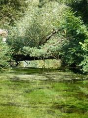 Biberfraß - Baum, Natur, Bach, Biber, Biberschaden, Biberfraß