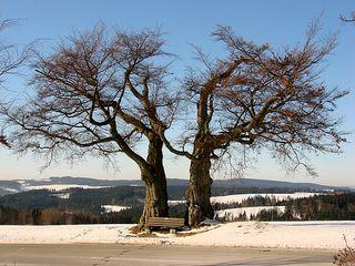 Baum im Winter - Laubbaum, Winter, wachsen, kahl, Stamm, Äste, verzweigt, Silhouette, Struktur, Schnee