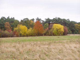Herbstimpression - Herbst, Herbstfarben, Schorfheide, Wald, Bäume, Laubfärbung