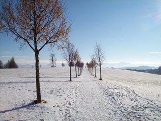 Allee - Allee, Winter, spazieren, wandern, Weg, Schnee, Bayern, Natur, Spuren, Bäume, kahl