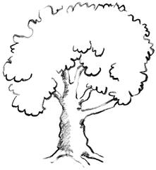 Baum - Baum, Ast, Illustration, Anlaut B, Laubbaum, Baumkrone, tree, Wörter mit au