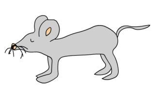 graue Maus - Maus, Feldmaus, Hausmaus, Mäuse, Anlaut M, grau, Illustration