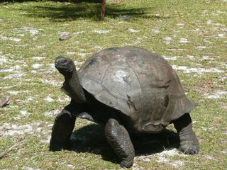 Schildkröte - Landschildkröte, Schildkröte, alt, Zeit, Steppenschildkröte, Vierzehenschildkröte, Reptil, Panzer, Schuppen, Winterruhe, langsam, Keratin, bedroht, Schildpatt, Artenschutz, Washingtoner Abkommen