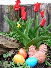 Ostereier mit Tulpen - Ostern, Tulpen, Frühling, Huhn, Osterfest, Ostereier, Frühblüber, Dekorationshuhn, gelb, orange, türkis, drei