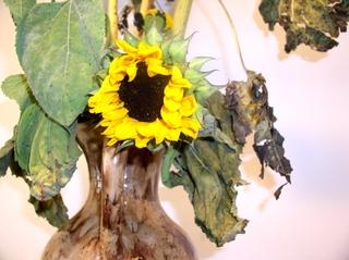 Sonnenblume 1 - Pflanze, Blume, Sonnenblume, Korbblütler, welk, welken