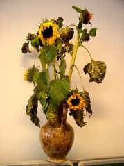 Sonnenblume 2 - Pflanze, Blume, Sonnenblumen, Sonnenblume, Korbblütler, welken, Vase