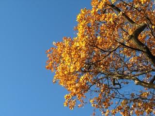 Herbstlaub - Herbst, Herbstlaub, Farbkontrast, Komplementärkontrast, orange, blau, Herbstfärbung