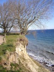 Brodtener Steilufer #1 - Ostsee, Steilufer, Abbruchkante, aktives Kliff, Baum, Strand, Lübecker Bucht, Niendorf, Travemünde, Ufer, Meer