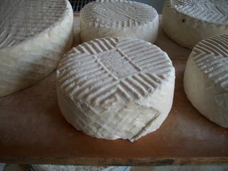 Ziegenkäse #3 - Ziege, Käse, Milch, Molkereiprodukt, reifen, Reifeprozess, Speisen, Geschmack, gesund, rund, Geißkäse, Geisschäs, konservieren, Gerinnung, Zylinder