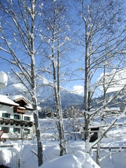 Winter - Bäume - Winter, Schnee, Bäume, Berge, Salzburg
