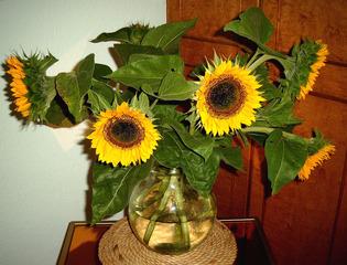 Sonnenblumenstrauß - Sonnenblumen, Sonnenblume, Strauß, Blume, Blüte, Korbblütler, gelb, grün, Blätter, Blütenblätter, Vase, 5, fünf
