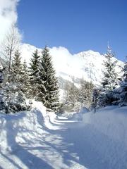 Winter - Weg - Winter, Schnee, Bäume, Weg, Salzburg, Berge, Tannenbäume