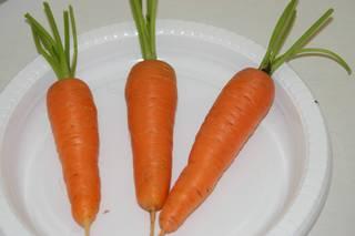 Karotten auf Teller - Karotten, Möhren, Gemüse, Nahrung, Karotte, Mohrrübe, Gelbe Rübe, Ruebli, Gemüse, Wurzelgemüse, Heilpflanze, drei