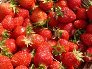 Erdbeeren #1 - Erdbeere, rot, Hintergrundbild, Obst, süß, Frucht, reif
