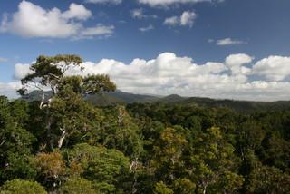 Regenwald - Regenwald, Stockwerkbau, Kronendach, Baumriese, naturbelassen, Ökosystem, Klima, feucht, Niederschlag