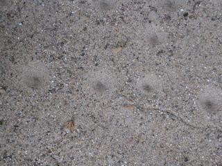 Spuren von Ameisenlöwen - Ameisenlöwe, Larve, Ameisenjungfer, Insekten, Insekt, Netzflügler, Sand, Trichter, Beute, fangen, Räuber, graben, Kegel