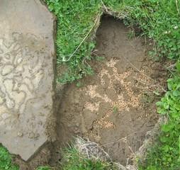 Ameisenbau - Ameise, Ameisenvolk, Insekt, Hautflügler, Kolonie, Eiablage, Ameisenstaat, Gewimmel, fleißig, klein, emsig, viele, schleppen, krabbeln