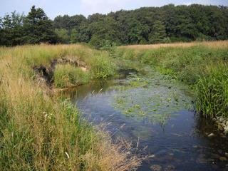 Renaturierungsmaßnahmen #3 - Schwartau, Fließgewässer, Renaturierung, Abbruch, Mäander