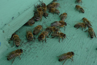 Bienenstock #2 - Biene, Bienenstock, Honig, sammeln, bunt, Nisthöhle, Behausung, Volk, Bienenvolk, Honigbiene, Beute, Magazin-Beute, Bienenzucht, Imkerei, Arbeitsbiene