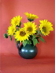 Sonnenblumen - Sonnenblumen, Strauß, Sommer, gelb, Blüte, blühen, Helianthus, Korbblütler, sunflower, Ölpflanze, Symbol, Vincent van Gogh, Stilleben
