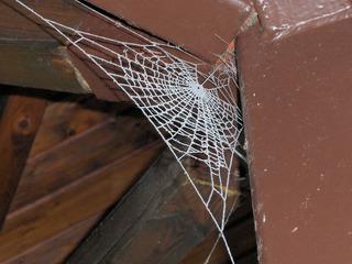 Spinnweb im Raureif - Spinnweb, Spinnennetz, Spinne, Netz, Raureif, Winter, kalt, Balken, Winkel, weiß, Resublimation