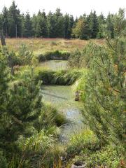 Das Hochmoor - Moor, Hochmoor, Moos, Vegetation