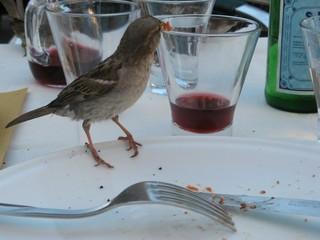 Frecher Spatz #1 - Sperling, Spatz, Singvögel, Vogel, zutraulich, neugierig, hungrig, kurios, Schreibanlass, witzig