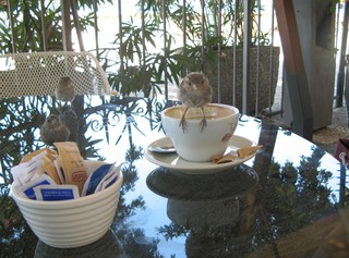 Frecher Spatz #5 - Sperling, Spatz, Singvögel, Vogel, zutraulich, neugierig, hungrig, Schreibanlass, witzig, Kaffee, Gastgarten, Tasse