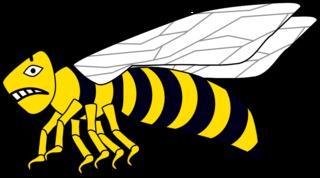 Wespe #4 - Wespe, Hautflügler, Sechsbeiner, Feldwespe, Insekt