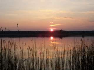 Sonnenuntergang am Drewitzer See - Drewitz, Drewitzer See, Sonnenuntergang, Schilf, Schilfgürtel, Spiegelung