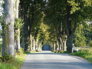 Naturdenkmal Lindenallee - Allee, Straße, Linde, Bäume, Alleebäume, Engstelle, Naturdenkmal
