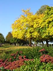 Hyde Park im Herbst - Hyde Park, Herbst, London, England, Park, Grünanlage, grüne Lunge