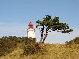 Leuchtturm # 3 - Leuchtturm, Leuchtfeuer, Signal, Schifffahrt, Seefahrt, Hiddensee, Insel, Ostsee, leuchten, warnen, steuern, Markierung, Seezeichen, Windflüchter, Kiefer, Kalenderbild