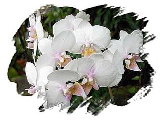 Orchidee - Orchidee, Blüte, Blumengruß, Geburtstagsgruß, Effektbild, Grußkarte, email