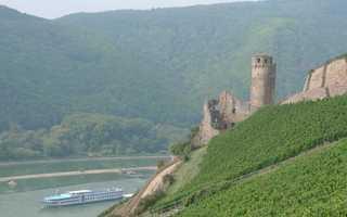 Burg Ehrenfels - Burg, Burgruine, Ehrenfels, Rheintal, Palas, Torbau, Rieslingpfad