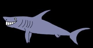 Hai #3 - Hai, Haie, Meerestier, Fisch, Zähne, spitz, Knorpelfisch, Anlaut H, Angriff, scharf, gefährlich, Gefahr, böse, Flosse