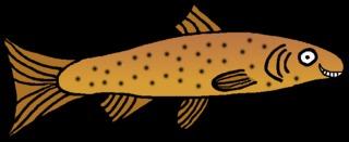 Forelle #4 - Forelle, Forellenfisch, Speisefisch, Fisch, Anlaut F, Flosse