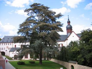 Kirche Kloster Eberbach #2 - romanisch, Kloster, Kirche, Zeder